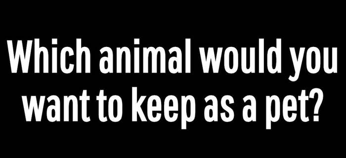 Which Animal Would You Want To Keep As A Pet