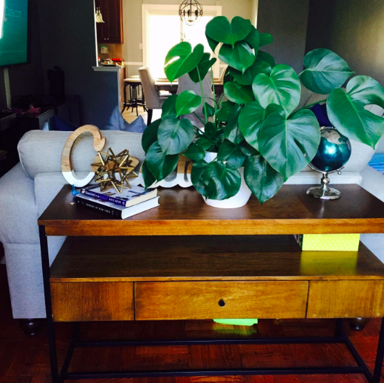 large plant with heart shaped leaves