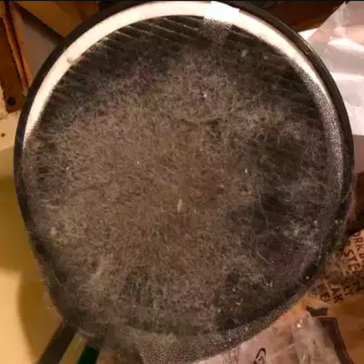 Filter open to show lots of dust pulled from the air