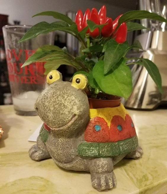 the mini turtle planter with red peppers growing out of it