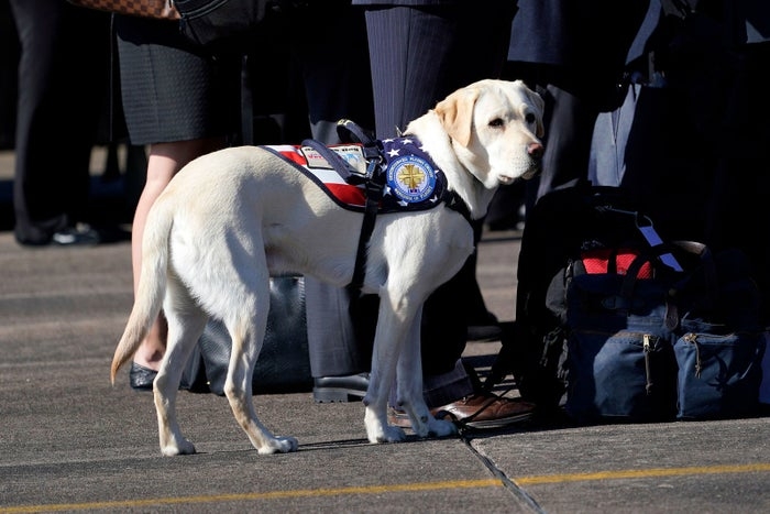 Sully, the yellow Labrador retriever who was the former president's service dog during the departure ceremony at Ellington Field.