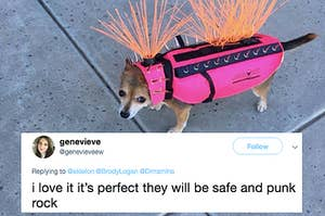 Dogs In Coyote Vests Are Equal Parts Safe And Punk Rock