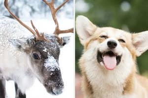 This Is What Santa's Reindeer Would Look Like As Dogs