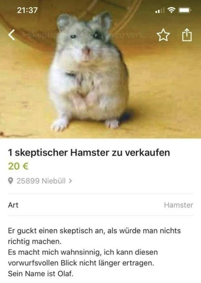 """Nicht nur dieser Tweet mit einem Foto der Anzeige erreichte fast 2000 Retweets und Likes, auch die Facebook-Seite """"Best of Kleinanzeigen"""" postete die Anzeige und sammelte dort knapp 5000 Likes, Kommentare und Shares ein, wow.""""Sehr albern und ohne Nutzwert, aber der skeptische Hamster bringt mich nachhaltig zum Lachen"""" oder """"Ich bin verliebt"""" schrieben Menschen auf Twitter zu Olaf."""