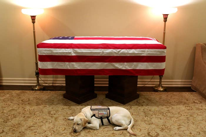 Sully, the service dog of former president George H.W. Bush in his final months, lies in front of Bush's casket at the George H. Lewis & Sons funeral home in Houston, Texas, on Dec. 3.