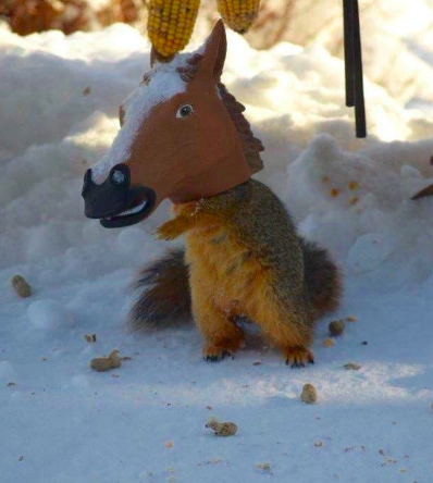 squirrel eating out of the horse head feeder