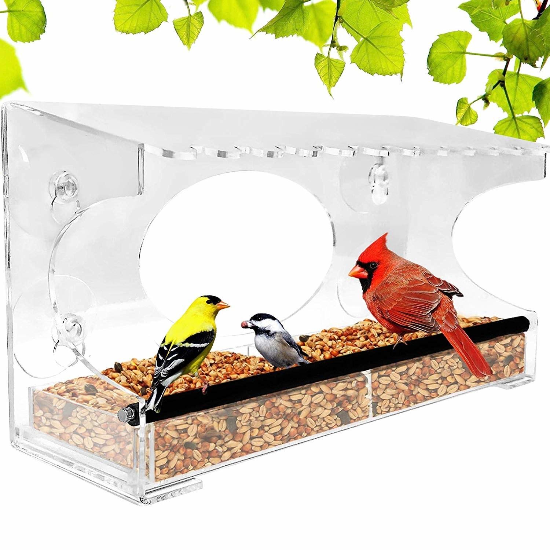clear stick-on bird feeder