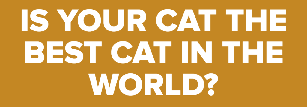 IS YOUR CAT THE BEST CAT IN THE WORLD?
