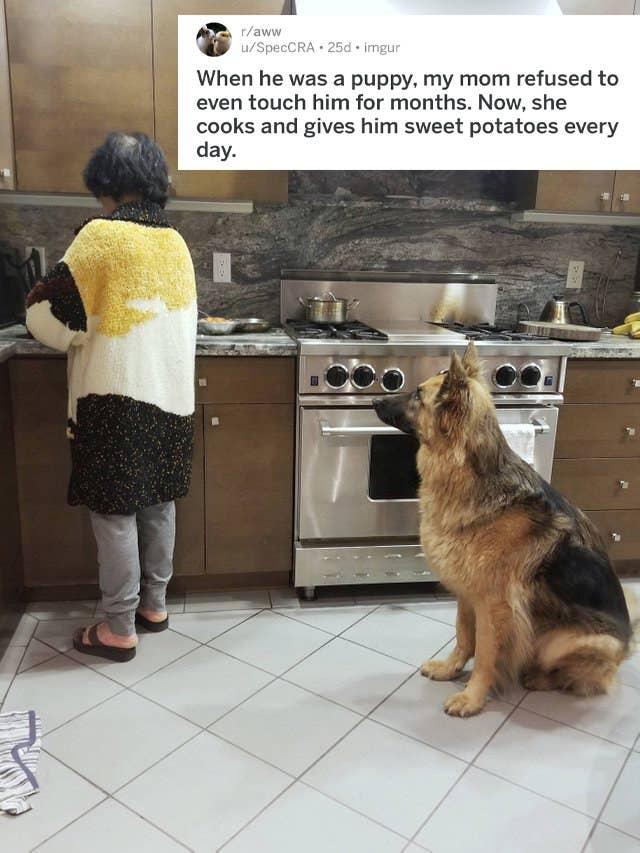 18 Reluctant Pet Parents Who Eventually Came Around