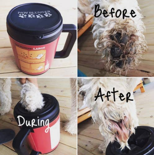Reviewer's before and after photos showing that the Paw Plunger got rid of all the brown dirt that was on their white dog's paw
