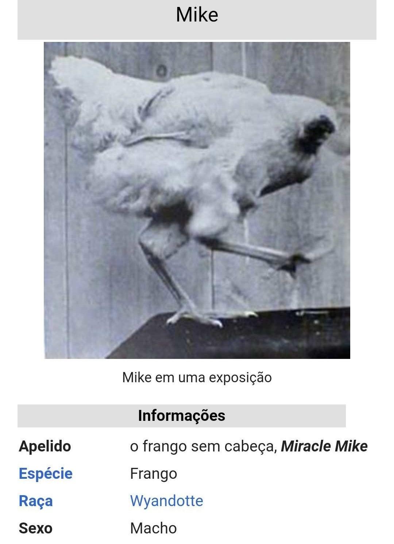 Acredite ou não, Mike foi um frango que, mesmo após ter sido decapitado, ainda viveu por dezoito meses nos anos 1940. Tanto que seu proprietário pediu para que especialistas comprovassem o fenômeno e após essa comprovação ele entrou para o Guiness por ser o frango que viveu mais tempo sem cabeça. Veja a curiosa vida de Mike completa aqui.