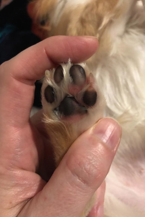 Soothe Your Pets' Dry, Cracked Paw Pads With Musher's Secret