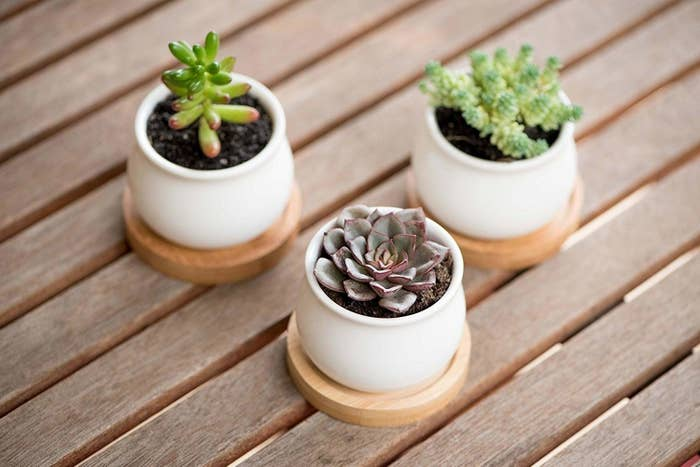"""A how-to care guide is included with every pack!Promising review: """"They are small and perfect for one succulent in each pot. They are well made, and look great! The drainage hole and the bamboo tray keep your surface dry when watering. My plants are doing very well in them, and I get tons of compliments on the pots!"""" — TammyGet them from Amazon for $15.97 and pick up a five-pack of real succulents for $15.95"""