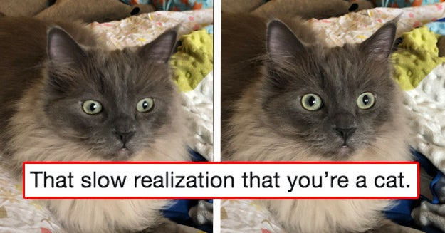 20 Cats From This Week Who Graced The Internet With Their Presence