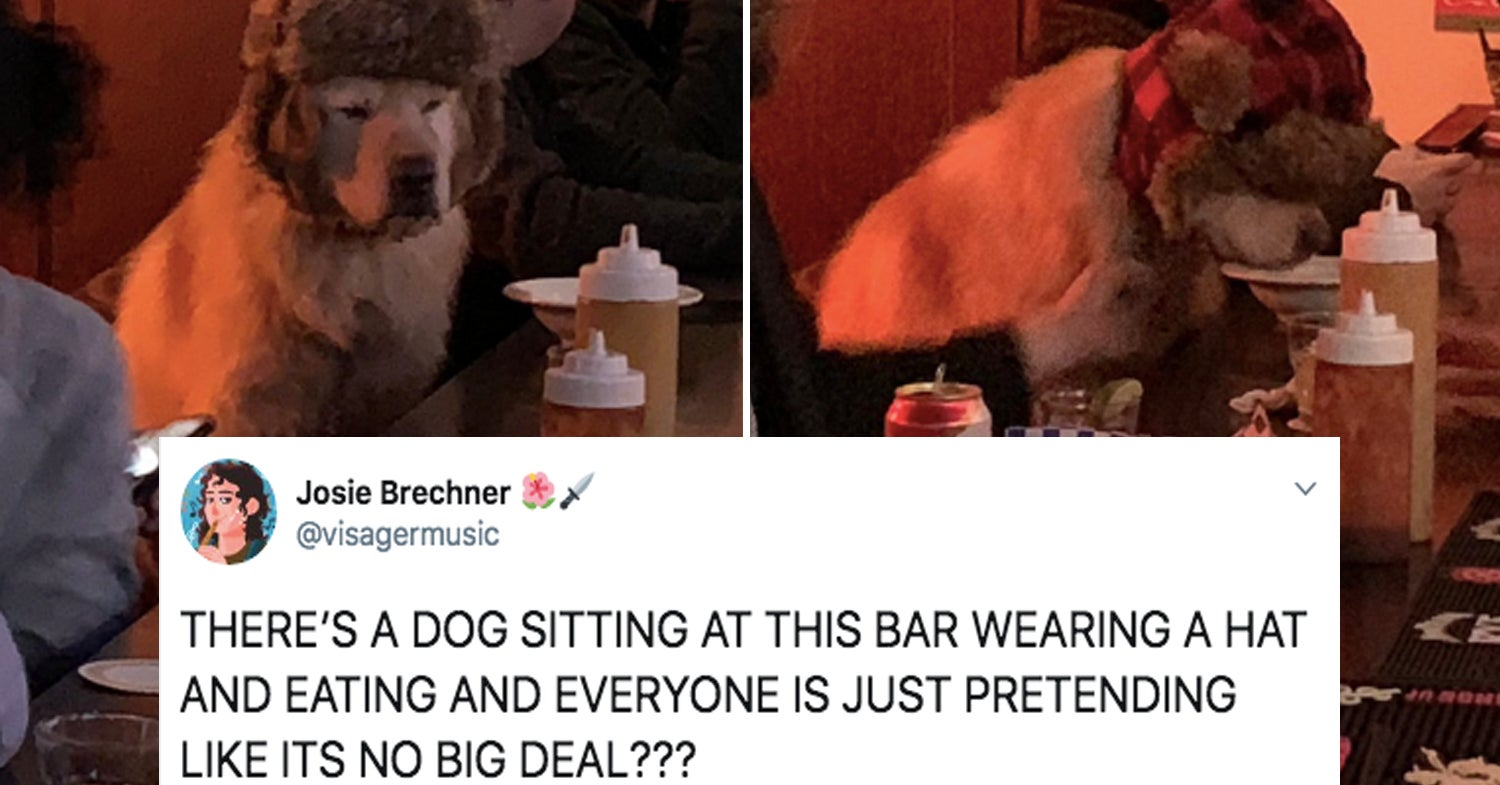 14 Dog Posts From This Week That You'll Treasure Forever