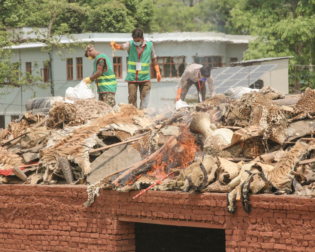 Nepali army personnel burn wildlife parts seized from poachers at Chitwan National Park.