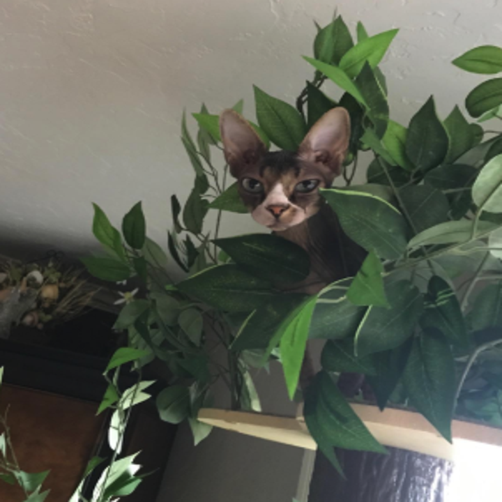 A cat inside the leaves