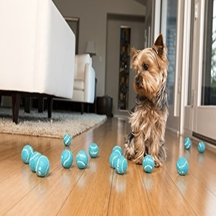 A dog with several toy balls on the floor