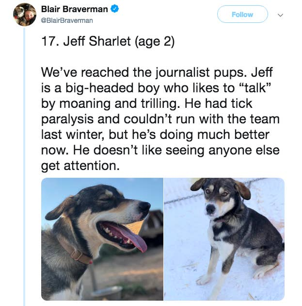 These Bios For A Team Of Sled Dogs Is The Purest Thing You'll See Today