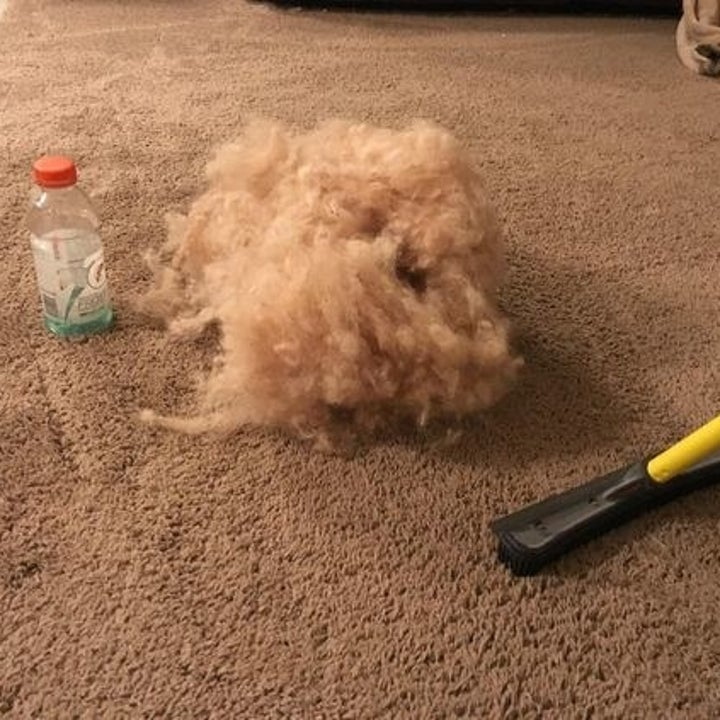 reviewer's enormous swept pile of hair next to a gatorade bottle for size, about equally tall
