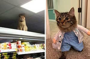 Here Are 17 Hardworking Cats Who Are The Best At Their Jobs