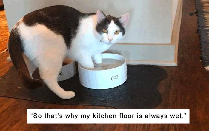 17 Cats That Just Didn't Give A Single Damn About Anything