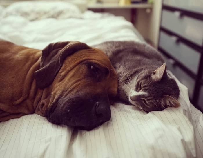 Cats And Dogs Being Best Friends