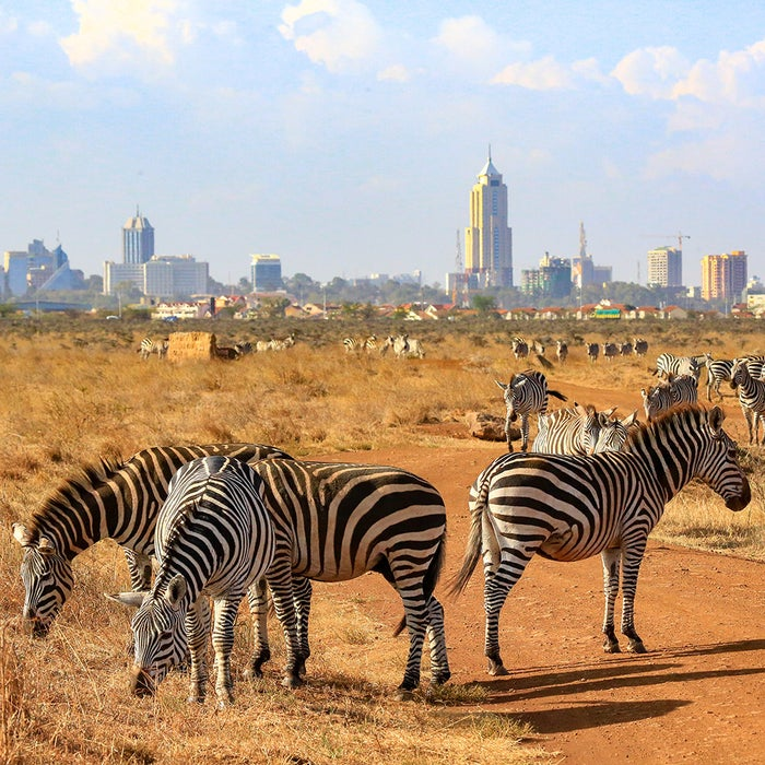 Who'll love it: animal loversWhy go in 2019: Thanks to the recent launch of a direct flight route between Nairobi and New York City, spotting elusive lions and leopards on safari is now just that liiiiitttle bit easier. As both Africa's safari capital and one of the continent's fastest growing cities, Nairobi offers a unique contrast between the city and the wild.
