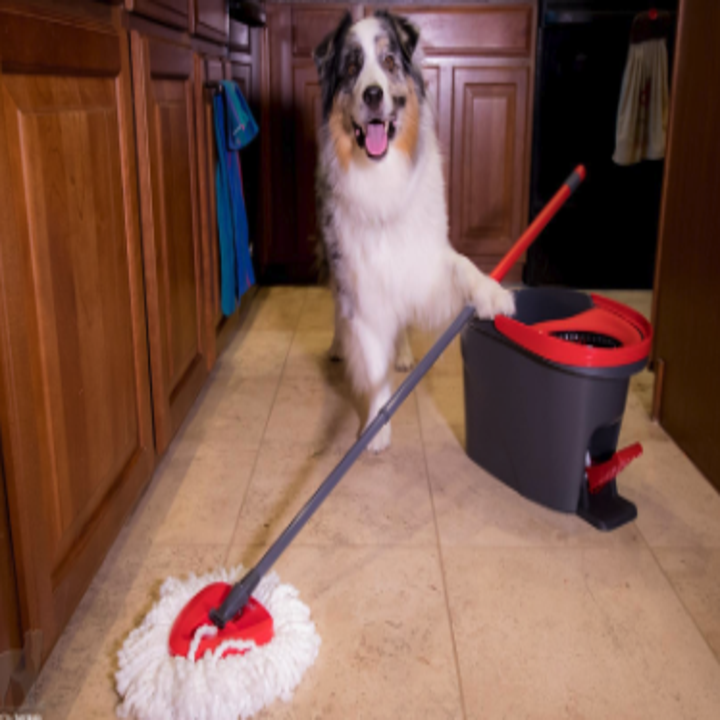 a dog next to the mop and bucket
