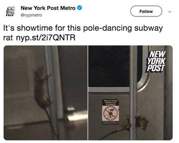 The 33 Most Incredibly New York City Things That Have Ever