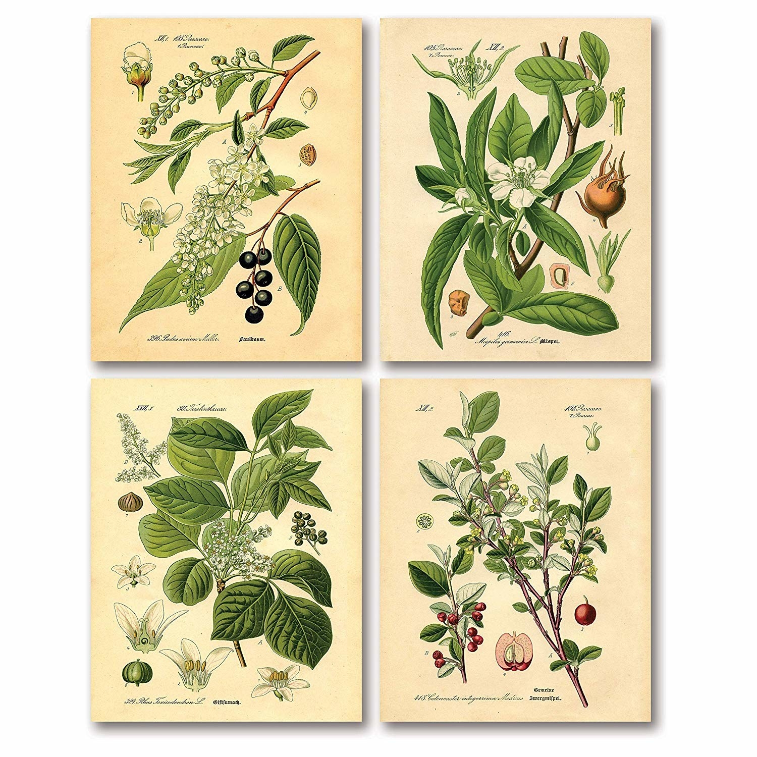 Set of four vintage botanical prints