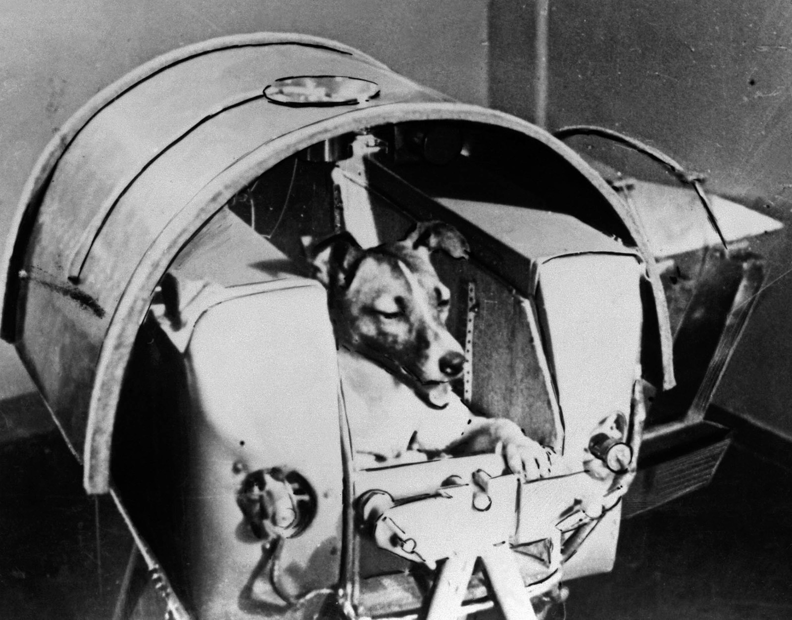 1957 Laika, the Russian cosmonaut dog, was the first animal to orbit the Earth, travelling on board the Sputnik 2 spacecraft launched on Nov. 3, 1957. The Soviet space programme used dogs and other animals to ascertain the viability of later sending humans.