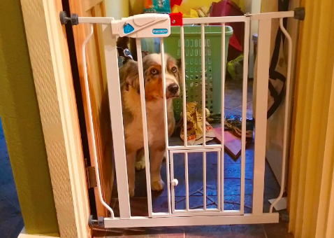 reviewer's dog looking sad behind a baby gate in a doorframe