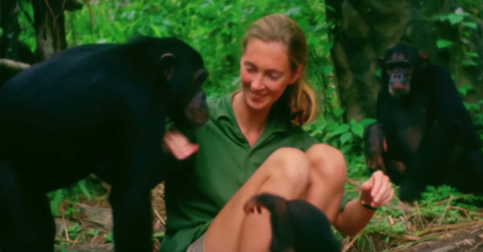 For those of you who don't know who Jane Goodall is, she's an English ethologist who is best known for long-term (almost 60 years!) and detailed research on the chimpanzees of Gombe Stream National Park in Tanzania. And you can learn more about her and her fascinating work here.