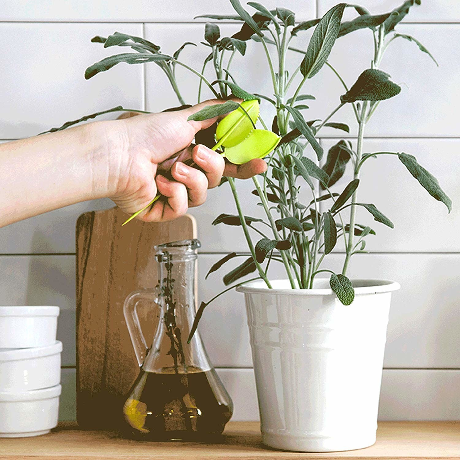 model clips sage plant with scissors shaped like two leaves