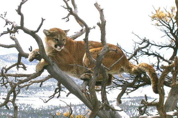 The Runner Who Choked A Mountain Lion To Death Used Every