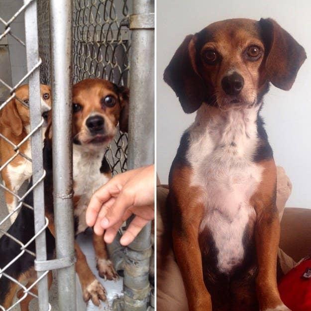 28 Pet Rescue Stories That'll Melt Your Heart