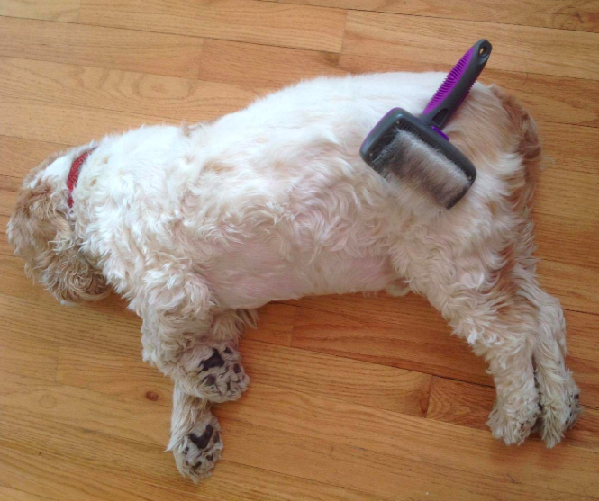"Promising review: ""My dog sleeps while I brush him. I have Arthritis and the handle is easy to grab. Easy to clean, just push button and is clean!"" —Belgica B. VelazquezPrice: $15.99"