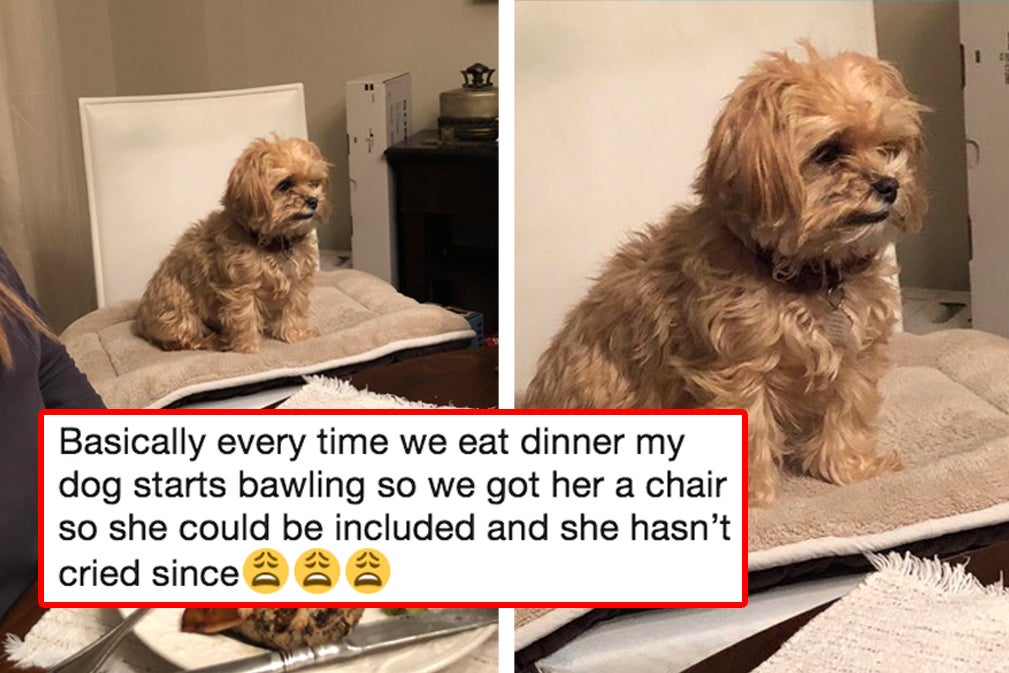 25 Heckin' Good Dog Tweets That Deserve A Share In Your Group Chat