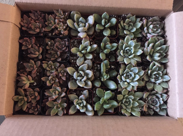 """I gave out succulents at my own wedding, so I can assure you they will be a big hit! My guests are still gushing over their lil' plants months and sending me pics of their growth. I'd definitely call it a wedding win.Promising review: """"These arrived absolutely perfect! They were packed so well. When I opened the boxes, every single plant looked so healthy that they actually looked plastic. Can't wait to showcase these as our table assignments/weddings favors for our big day! Would definitely order again!!!"""" —Kelli WanzeckGet a pack of 100 on Amazon for $149.99+ (available in packs of 4–256)."""