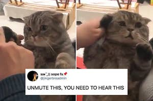 14 Cat Posts From This Week That'll Make You Wanna Cradle Your Cat Like A Human Baby