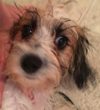 A customer review photo of their wet pup