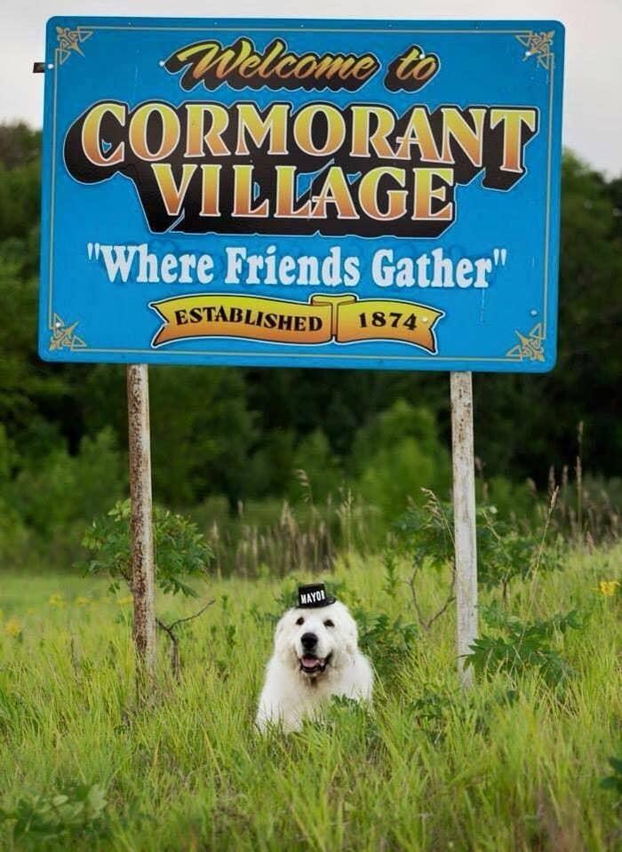 Duke The Dog Mayor Has Died