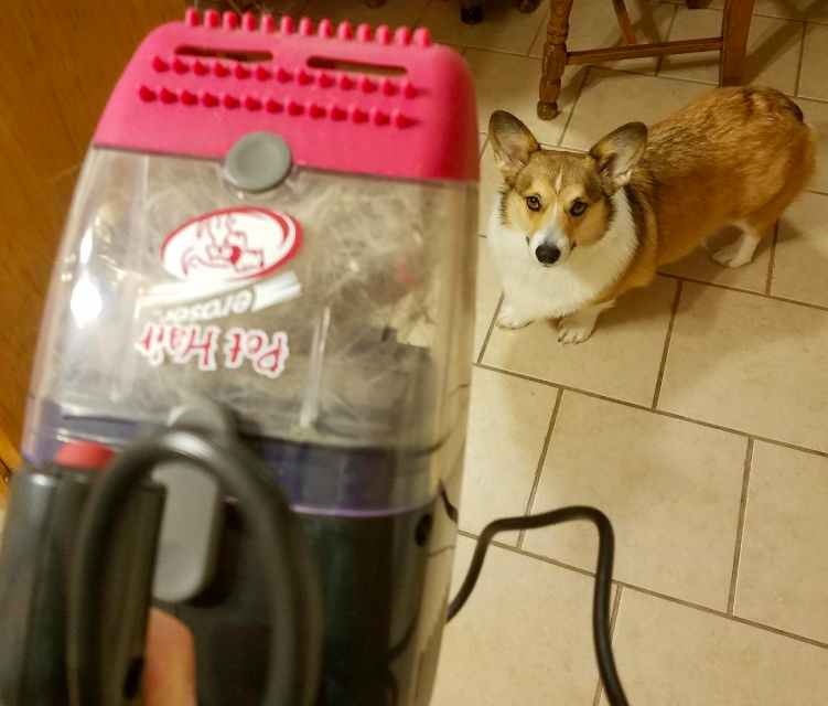 A customer review photo of them holding the vacuum next to their dog