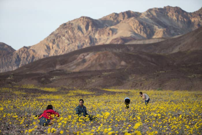 Tourists take picture of wildflowers in Death Valley National Park, one of the parks that would be expanded under the legislation.
