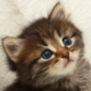 kitty_25 profile picture