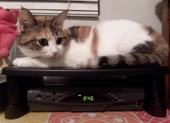 a reviewer's cat laying on the stand
