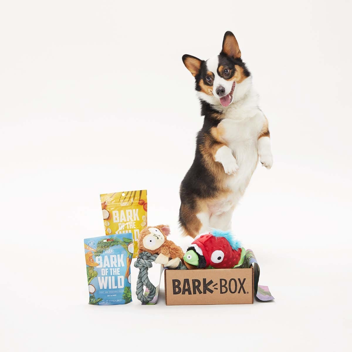 dog dances next to box of toys and treats