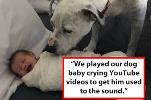 People Are Sharing The Smartest Things Their Pets Have Done
