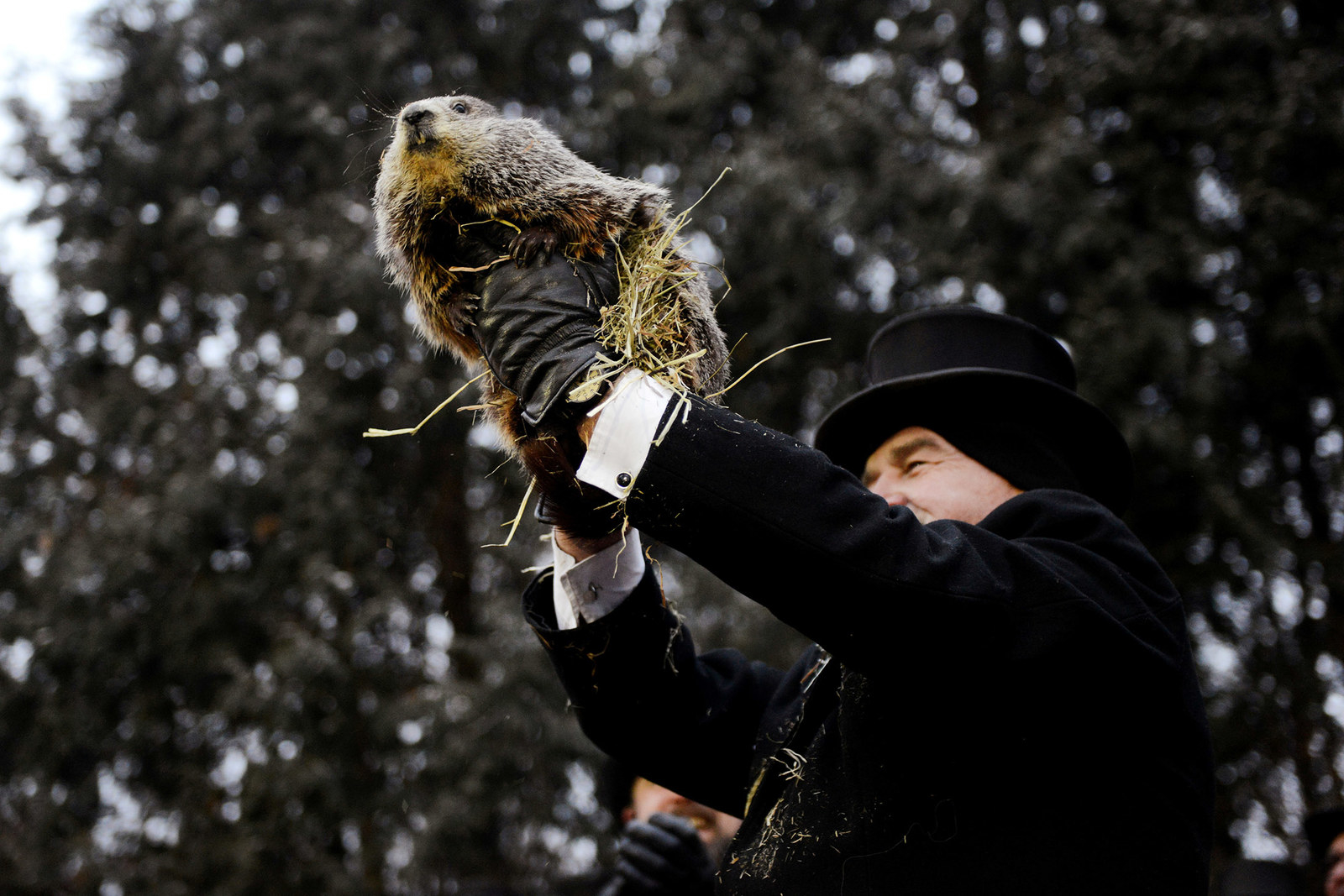 Punxsutawney Phil is introduced to the crowd on the 133rd Groundhog Day in Punxsutawney, Pennsylvania, U.S., February 2, 2019. REUTERS/Alan Freed TPX IMAGES OF THE DAY - RC1BA0F5AA00
